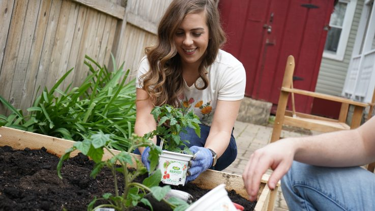Katie Roselieb plants Bonnie Plants Harvest Select vegetable plants in her raised garden bed. The collection is specifically designed to help home growers have a more successful harvest as more young people start gardens to grow their own fresh food.